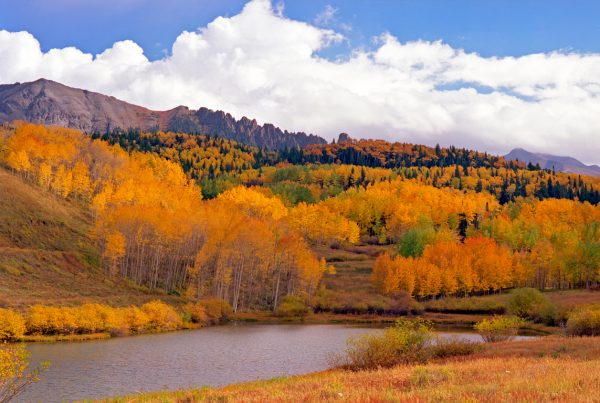 San Juan Pond and Aspens